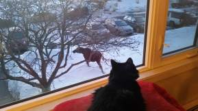 Aibell and Moose