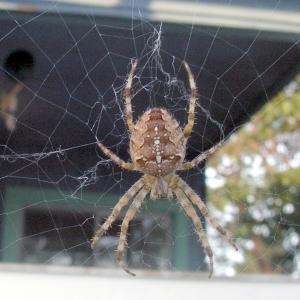Closeup image of garden spider on web